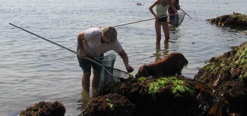 pêche à pied à beg meil