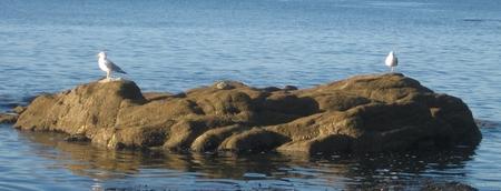 des goelans sur un rocher