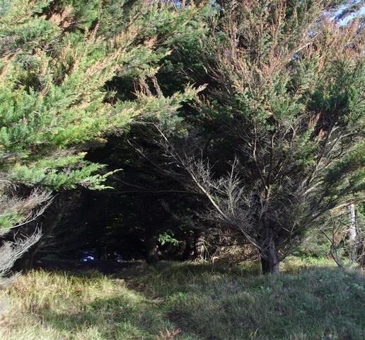 bois de pins fouesnant