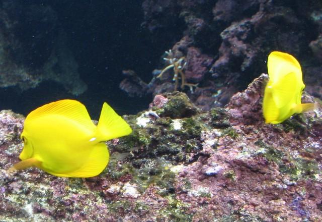 aquarium de brest