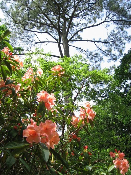 parc-botanique-combrit.jpg